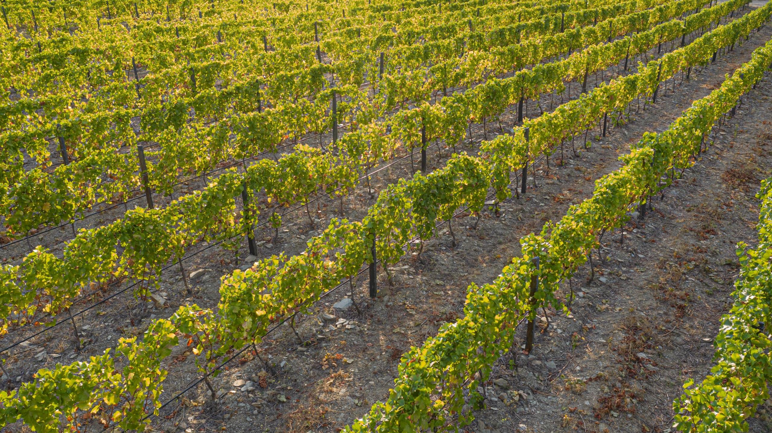 Suelos y climas: Nuestras uvas